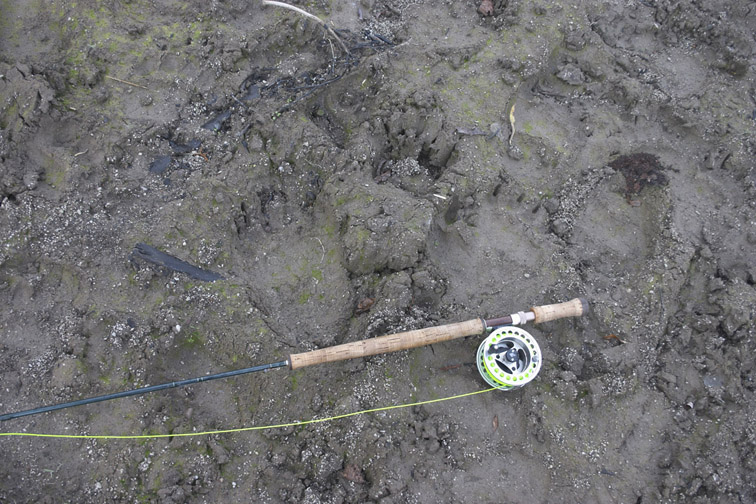 Alt-Kamchatka Raduga bear