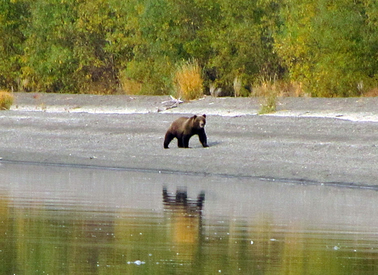 Alt-Kamchatka Azhabachie Lake bear