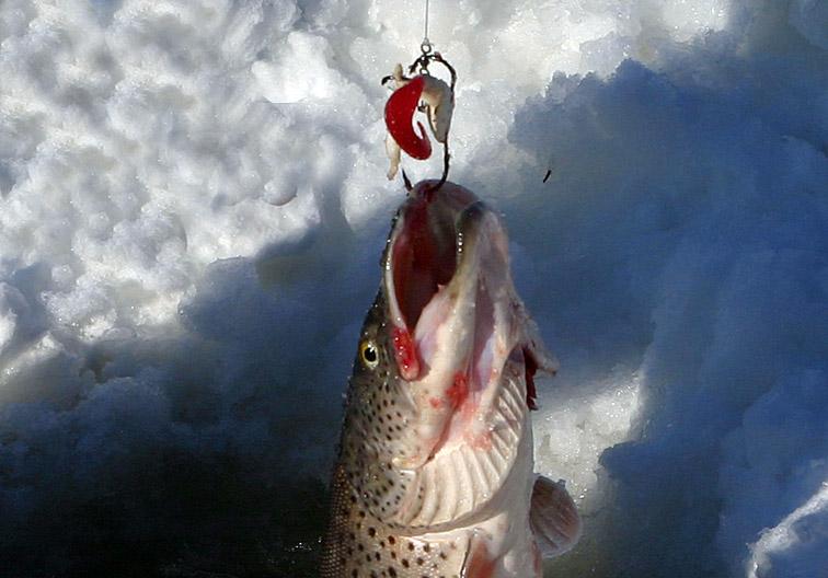 Alt-Амур подледная рыбалка амурская щука