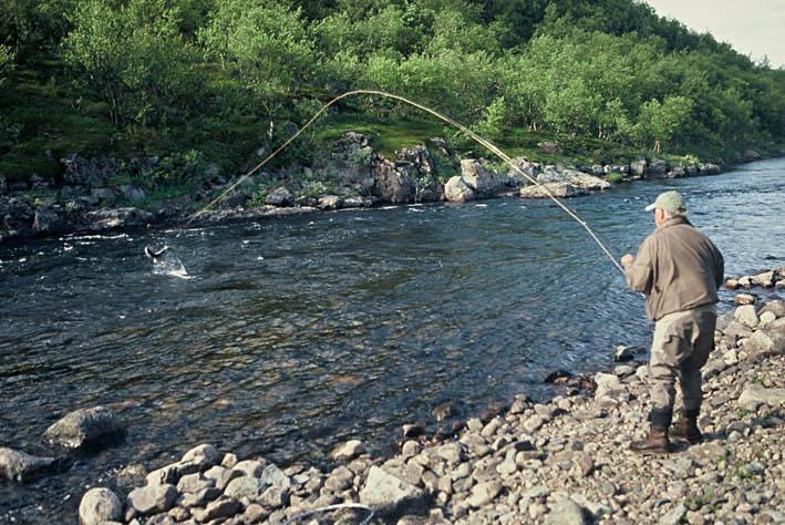 Alt-salmon jumping varzina