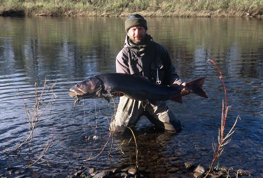 Alt-salmon Varzina Kola
