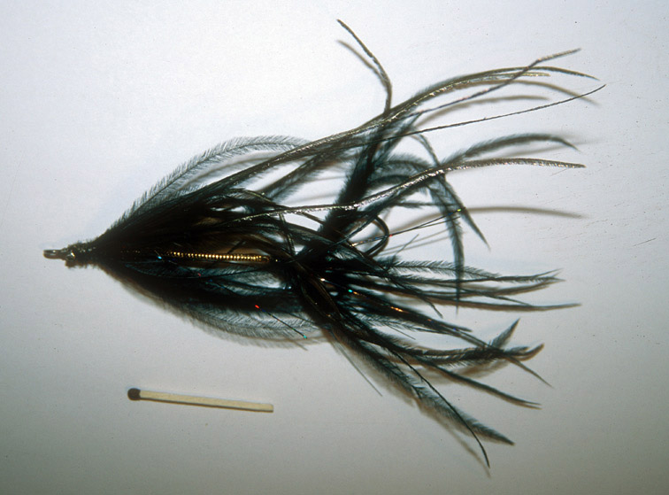 Alt-Far Eastern Flies squid