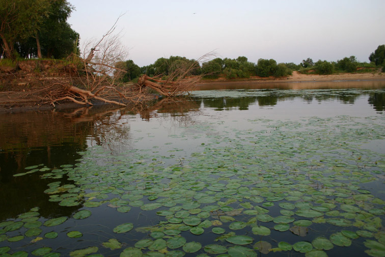 Alt-Амур озеро