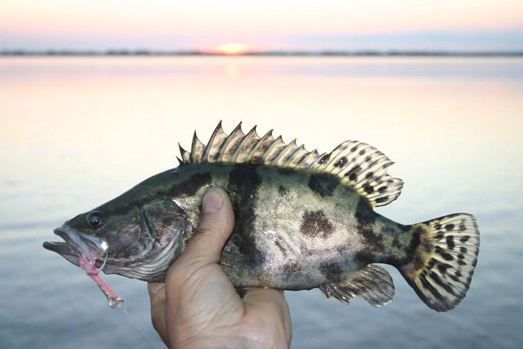Alt-Amur-flyfishing-mandarin-bass