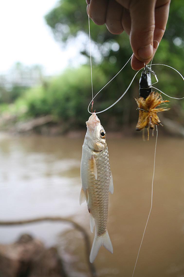 Alt-Африка Конго рыбалка