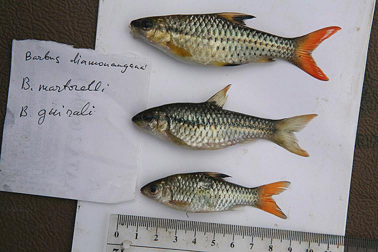 Alt-Africa Congo fishing