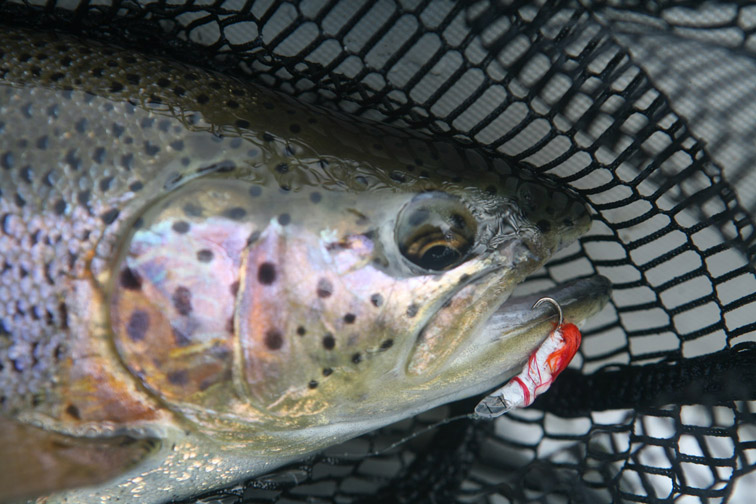 Alt-Kamchatka-flyfishing-rainbow-trout