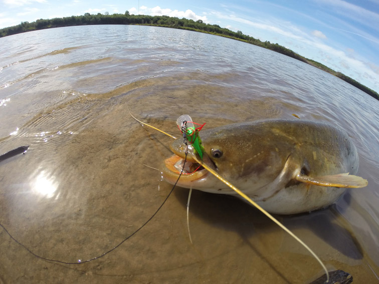 Alt-Amur-flyfishing-catfish