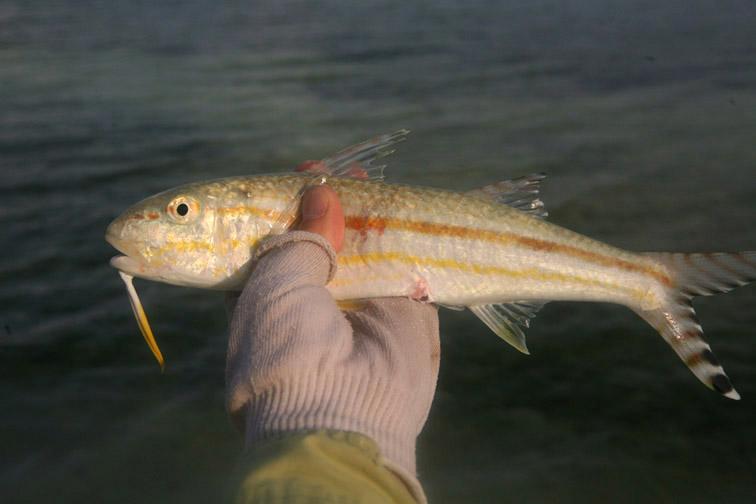 Alt-Сейшелы-Альфонс-рыбалка-нахлыст