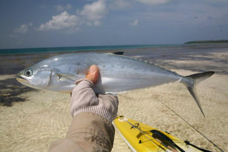 Alt-Seychelles-flyfishing-Alphonse-queenfish