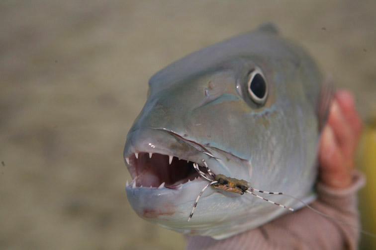 Alt-Сейшелы-Альфонс-рыбалка-нахлыст-априон