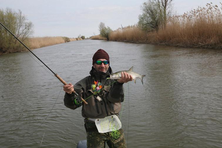 Alt-Volga-delta-perch-asp-flyfishing