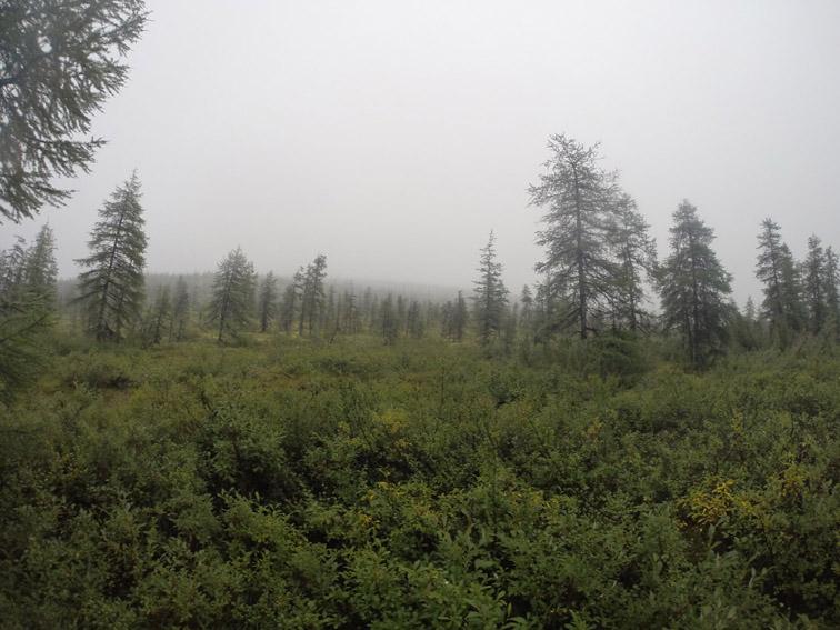 Alt-Чукотка-Большой Анюй-Баимка-лесотундра