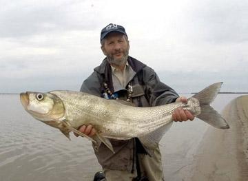 Alt-Amur-skygazer-flyfishing