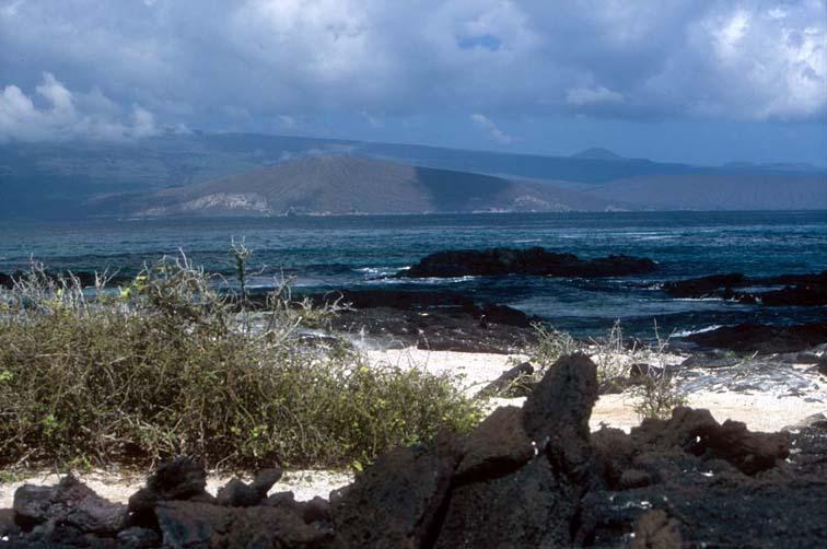 Alt-Galapagos, Fernandina