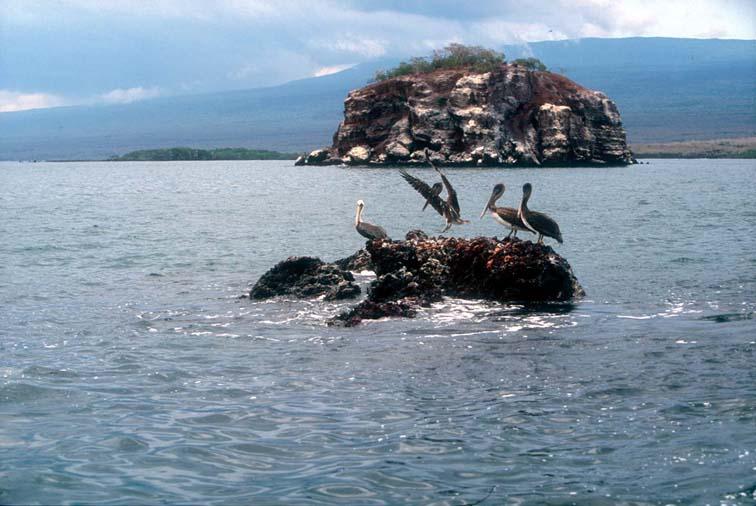 Alt-Galapagos, Isabela