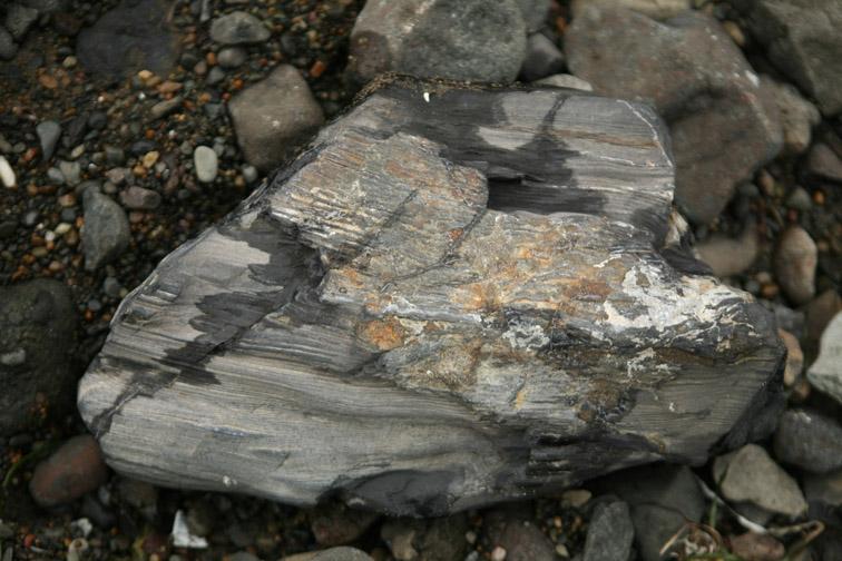 Alt-Sakhalin-Tatar Strait-petrified wood