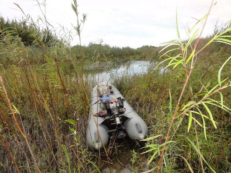 Alt-Amur River-flyfishing-Prussian carp