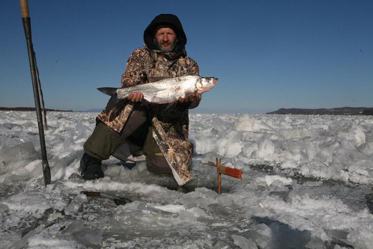 Alt-Амур-зимняя рыбалка-верхогляд