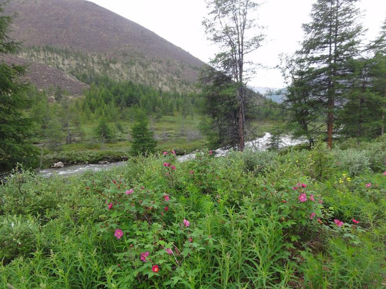 Alt-Chukotka-Yakoveem River-Bolshoi Anyui