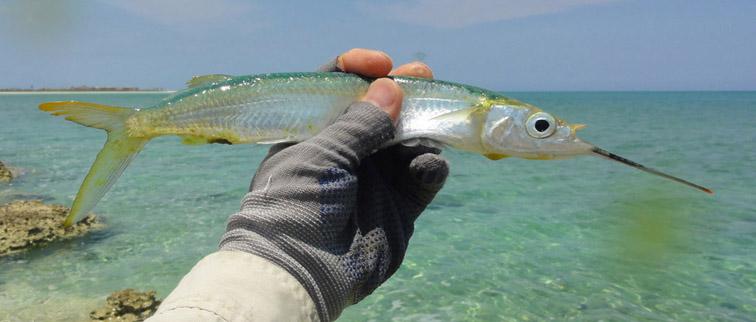 Alt-Cuba-Cayo Coco-Cayo Guillermo-fishing-flyfishing-ballyhoo