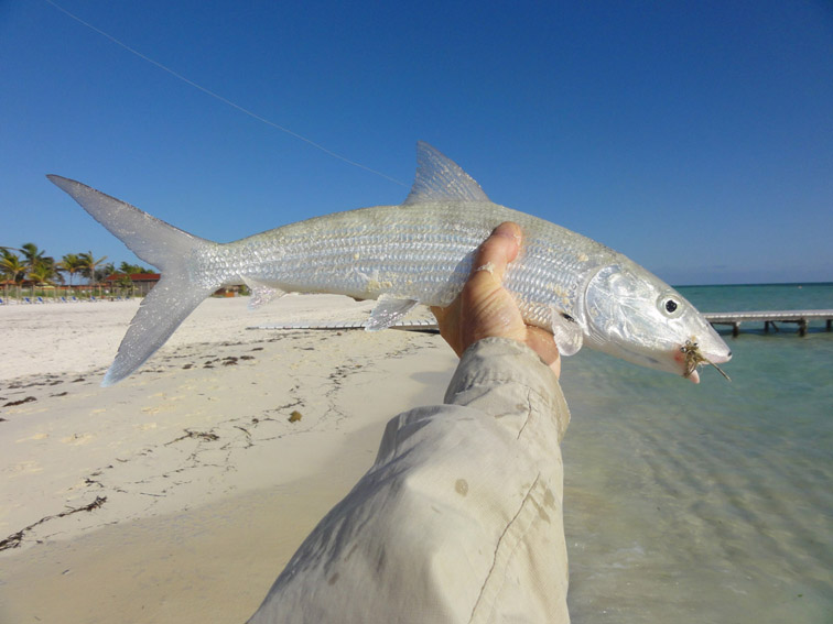 Alt-Cuba-Cayo Coco-Cayo Guillermo-fishing-flyfishing-bonefish