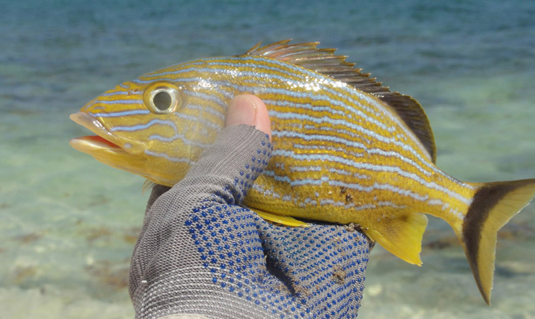 Alt-Куба-Кайо Коко-Кайо Гийермо-рыбалка-нахлыст
