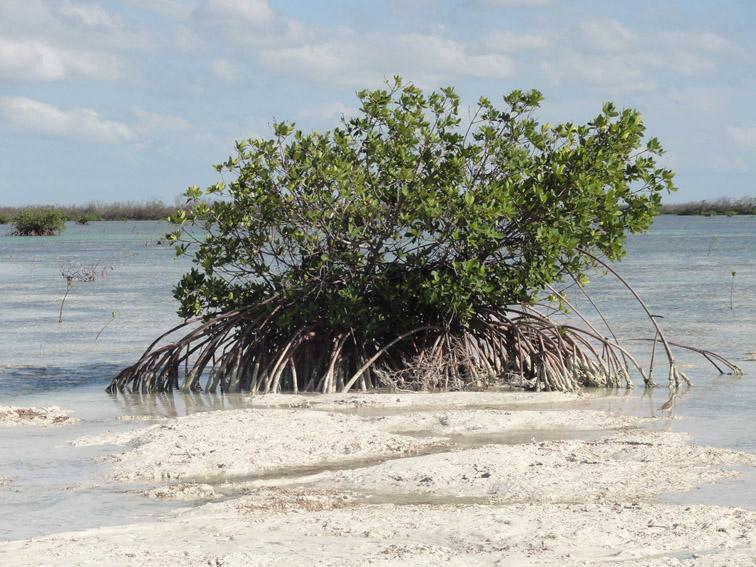 Alt-Cuba-Cayo Coco-Cayo Guillermo-nature