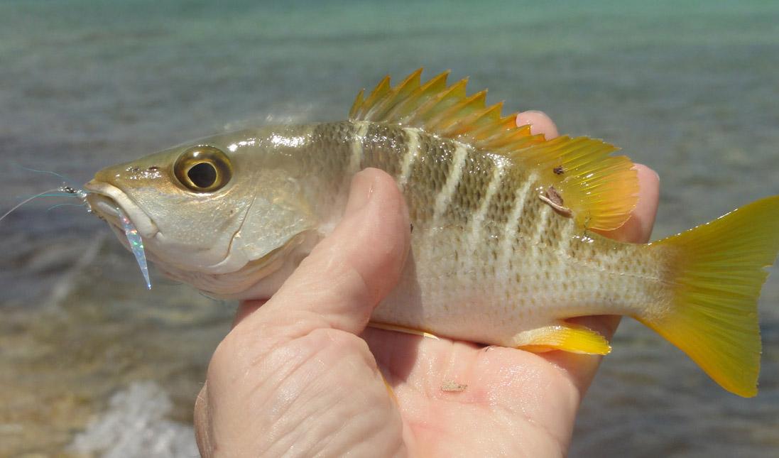Alt-Куба-Камагуэй-Ла Бока-морская рыбалка-нахлыст