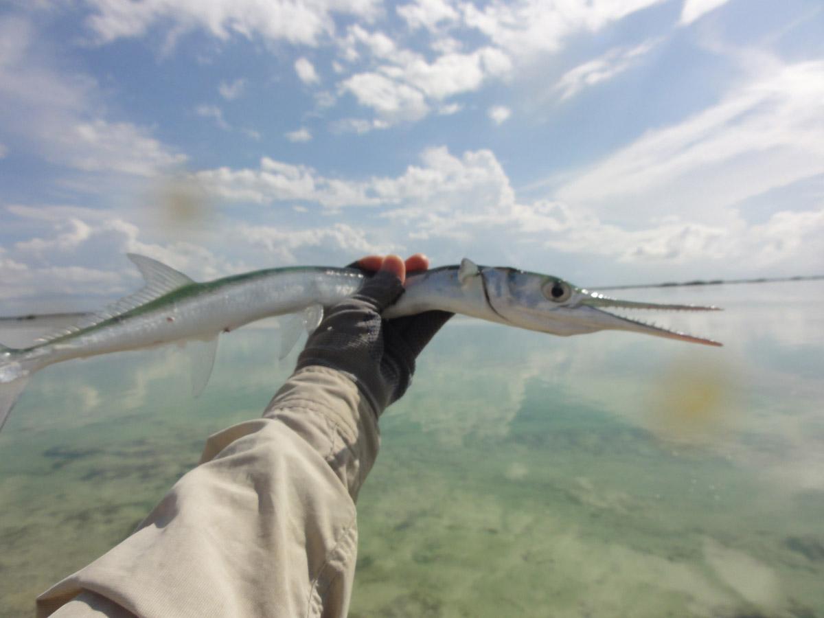 Alt-Cuba-Camaguey-La Boca-fishing-saltwater-flyfishing-needlefish