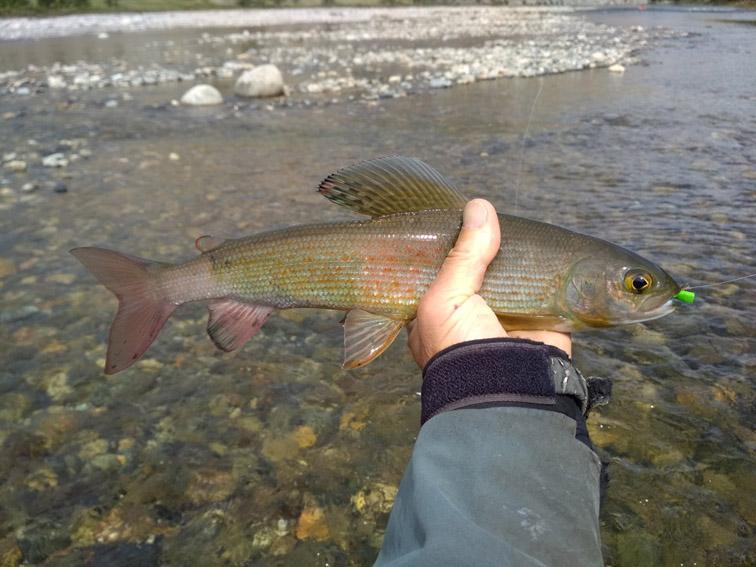 Alt-Mongolia-Selenge-Delger-Muren-rafting-flyfishing-grayling