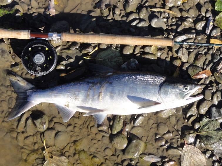 Alt-Tugur-chum salmon-flyfishing
