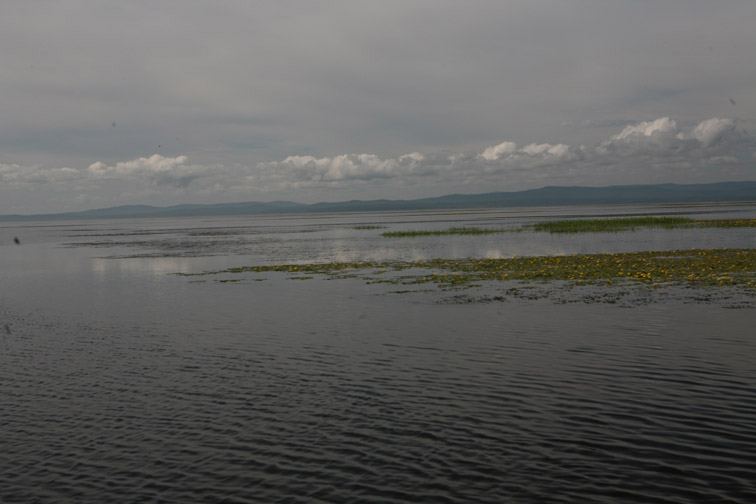 Alt-Amur-Amgun-Dalzha