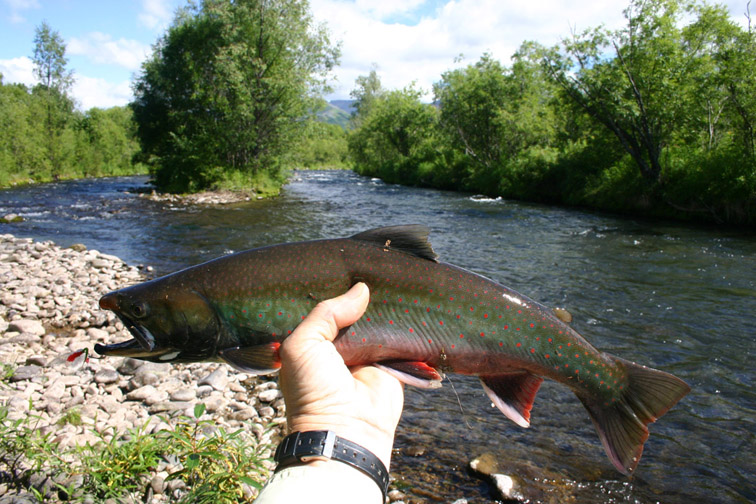 Alt-Камчатка-река Копылье-Ича-голец-мальма