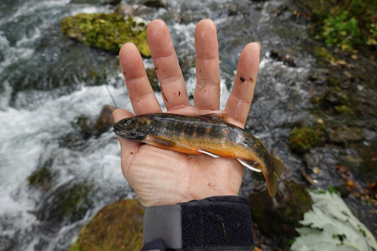 Alt-Amur-Ul-flyfishing