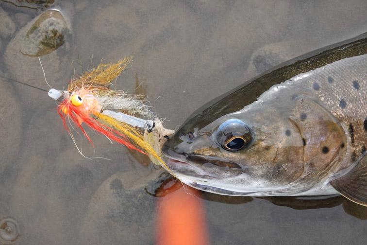 Alt—Tugur-Konin-flyfishing-bluntnose lenok