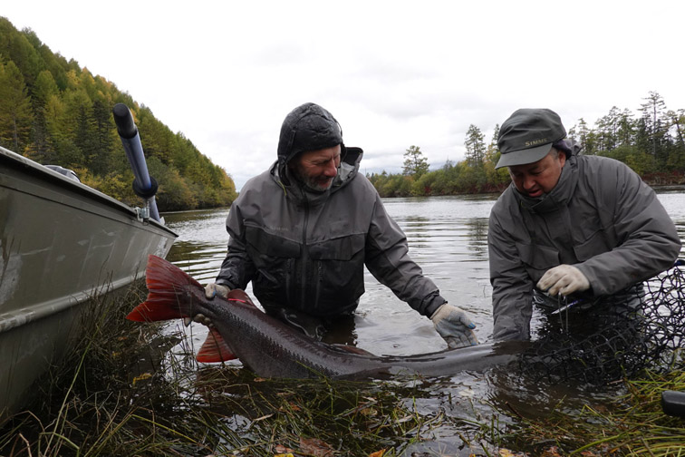 Alt—Tugur-Konin-flyfishing-Siberian taimen