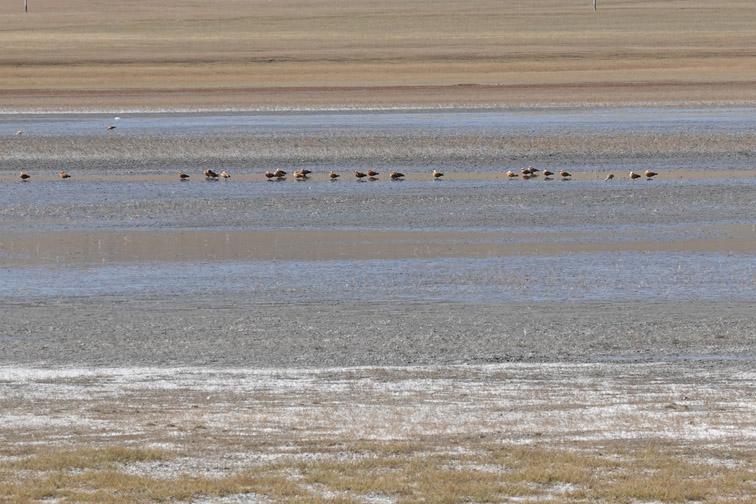 Alt-Монголия-Онон-таймень-нахлыст