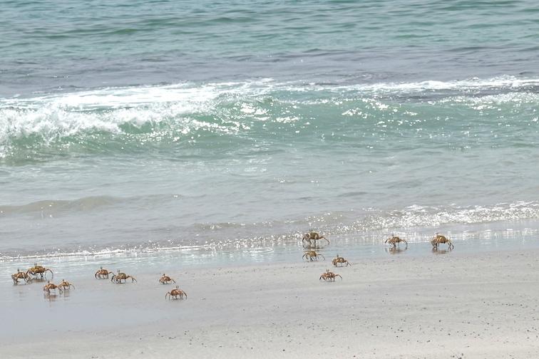 Alt-Oman-Salalah-Arabian Sea-flyfishing