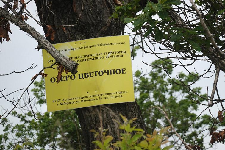 Alt-рыбы Амура-рыбы Уссури-природный парк Шереметьевский