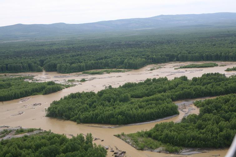 Alt-Siberian taimen-June