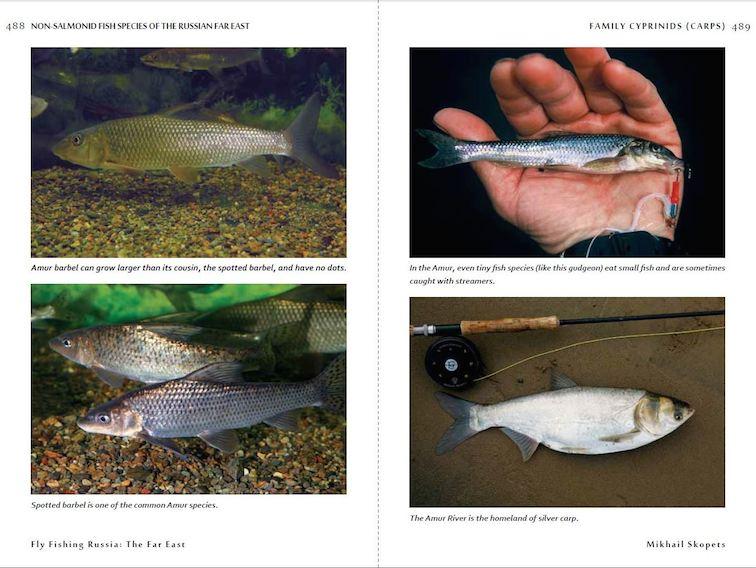 Alt-Flyfishing Russia: The Far East, flyfishing, travel