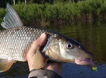 Alt-Amur-fishing-flyfishing