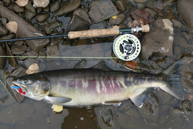 Alt-fly-flyfishing-chum salmon-Amur River