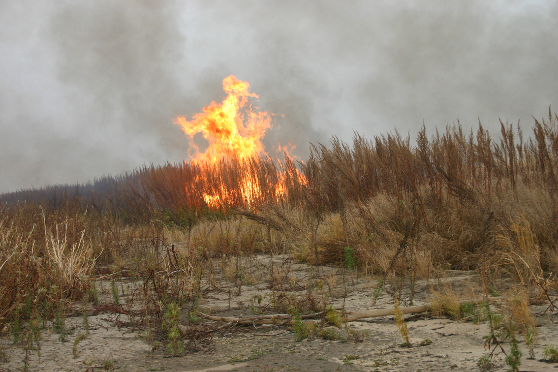 Alt-Far East-Amur River-grassfire