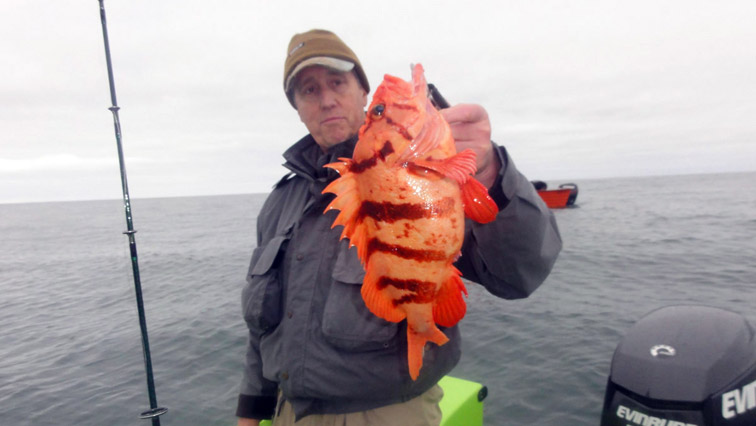 Alt-USA-Oregon-Pacific City-flyfishing-tiger rockfish-Nestuccа