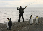 Alt-Patagonia fishing penguins