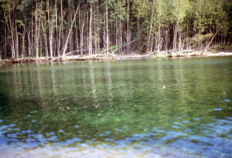 Alt-река Яма кижуч
